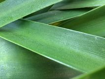 有厚实的刀片/叶子的绿色植物 免版税库存照片