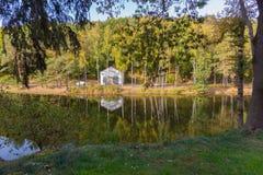 有反射在岸的高桦树水的光滑的表面的一个湖  库存图片
