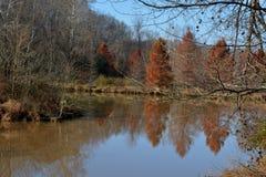 有反射的池塘 库存图片