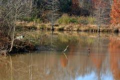 有反射的池塘 免版税库存图片