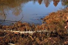 有反射的池塘 免版税库存照片