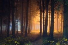 有发光的光的神秘的夜森林 免版税库存照片