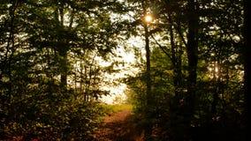 有发光的太阳的美丽的秋天森林-移动式摄影车射击 影视素材