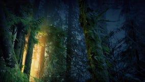 有发光通过树的金黄光的不可思议的森林 股票录像