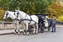 有古板的穿戴的夫妇的马支架 库存图片