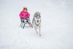 有可爱的小女孩与多壳的拉雪橇狗的一个拥抱 免版税库存图片