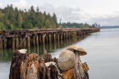 有可看见的贝壳的被放弃的码头 图库摄影