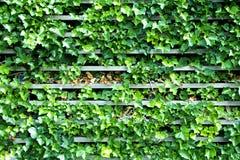 有叶子和木头的墙壁 库存照片