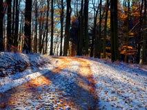 有叶子的一个道路低谷森林吼叫第一雪 免版税库存照片