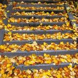 有叶子的台阶 免版税库存照片