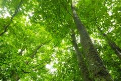 有叶子的树木天棚 免版税库存照片