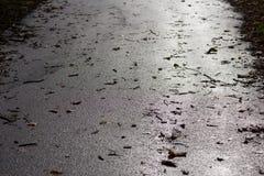 有叶子的湿柏油路 免版税库存照片