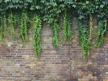 有叶子的砖墙 免版税库存图片