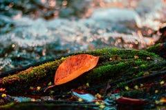 有叶子的秋天河 库存图片