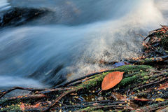 有叶子的秋天河 免版税库存照片