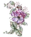 有叶子的罗斯在花束 背景查出的白色 库存图片