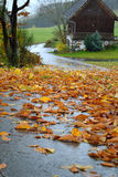 有叶子的雨slicked路 免版税库存照片