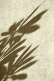 有叶子的阴影的墙壁 免版税库存图片