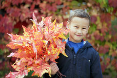 有叶子的年轻男孩在公园 免版税库存照片
