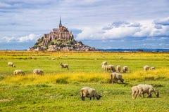 有吃草的绵羊的,诺曼底,法国圣米歇尔山 库存照片