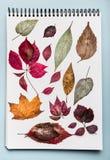 有各种各样的五颜六色的干秋叶的白皮书笔记本 与秋天叶子的干燥标本集文件夹 免版税库存图片