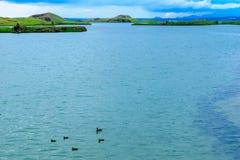 有各种各样的火山岩形成的湖Myvatn 库存照片