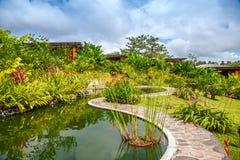 有各种各样的热带植物和花的庭院 库存图片