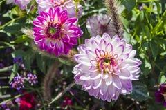 有各种各样的花的美丽的五颜六色的花园 免版税库存图片