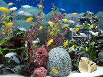 有各种各样的鱼和蓝色背景的水族馆 免版税库存照片