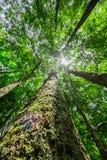 有后边太阳的森林 库存图片