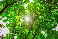 有后边太阳的森林 免版税库存图片