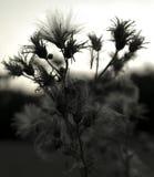 有后面光的植物 库存图片