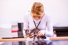 有听诊器审查的猫的兽医与疼痛胃 免版税库存图片