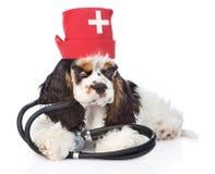 有听诊器的猎犬小狗佩带的帽子医生 查出在白色 库存图片