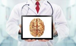 有听诊器的医生和在手上的金黄脑子在医院 图库摄影
