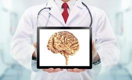 有听诊器的医生和在手上的金黄脑子在医院 免版税库存照片