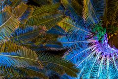 有启发性棕榈树在晚上-热带背景 图库摄影