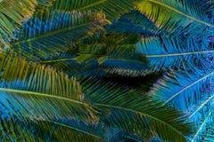 有启发性棕榈树在晚上-热带背景 免版税库存照片