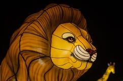 有启发性狮子 免版税库存照片