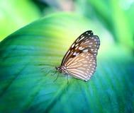 有启发性的明亮的照片蝴蝶异乎寻常 免版税库存照片