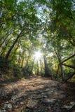有启发性道路在森林 库存图片