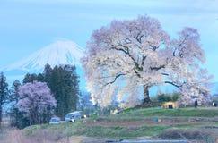 有启发性Wanitsuka佐仓夜视图在小山的一棵300年樱桃树与积雪覆盖的富士山在背景中 库存照片