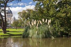 有和平的黑鸭游泳的平安的池塘在卡尔顿庭院 库存照片