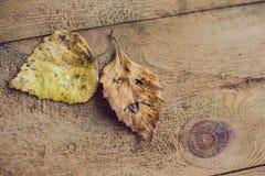 有哀伤的面孔的黄色和绿色叶子在老木背景 免版税库存照片
