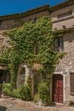 有商店的石在圣徒保罗deVence的房子和野生植物 免版税图库摄影