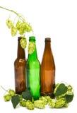 有啤酒花球果树的瓶 免版税库存照片