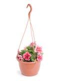有喇叭花的垂悬的罐 库存图片