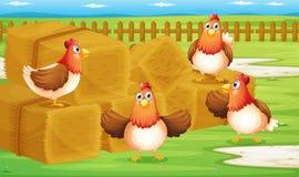 有四只母鸡的一个农场在篱芭里面 库存图片