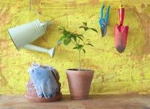 有园艺工具的一棵植物, 库存照片