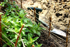 有园艺工具的草本庭院 免版税库存照片